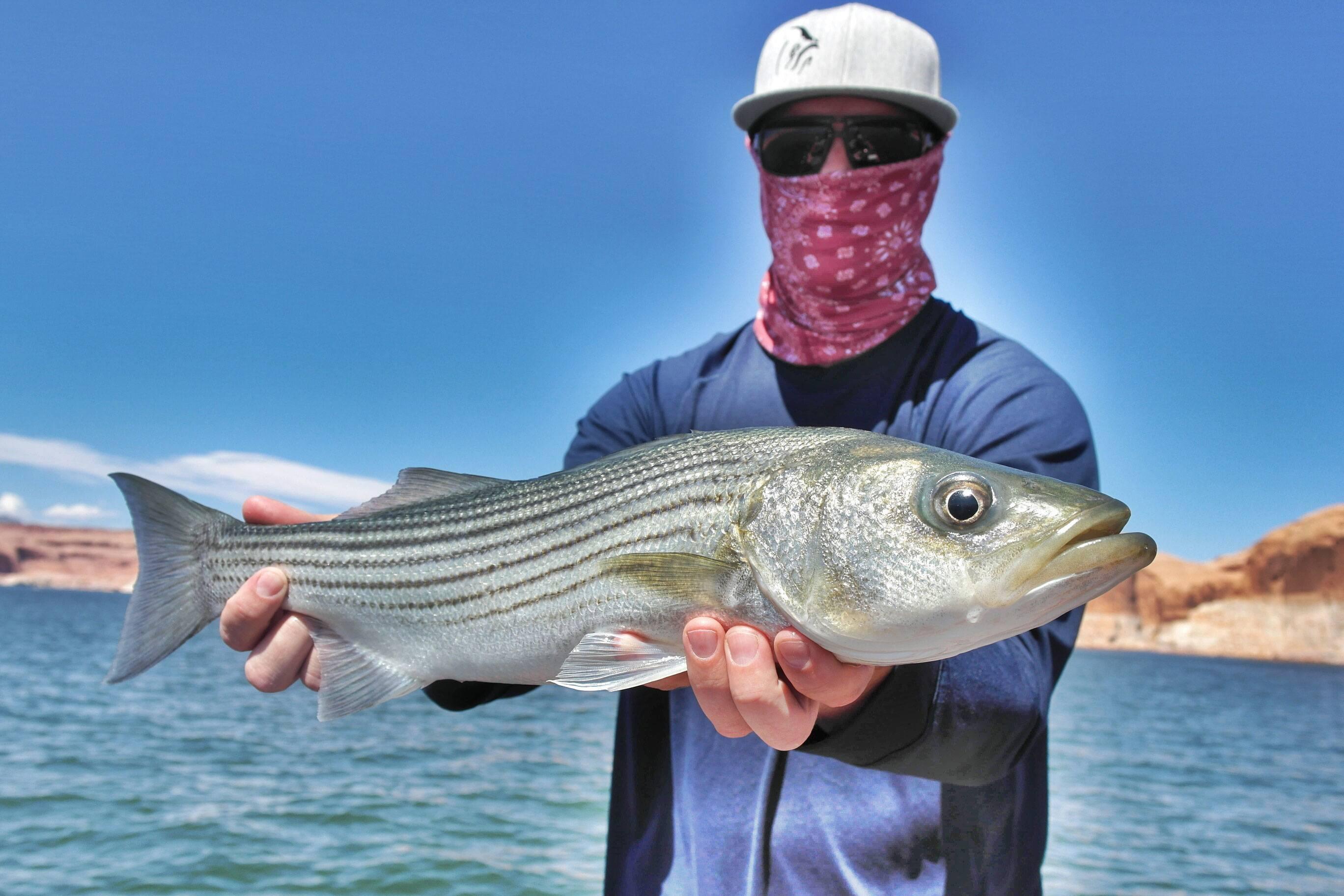 Best neck gaiter related keywords best neck gaiter long for Neck gaiter fishing