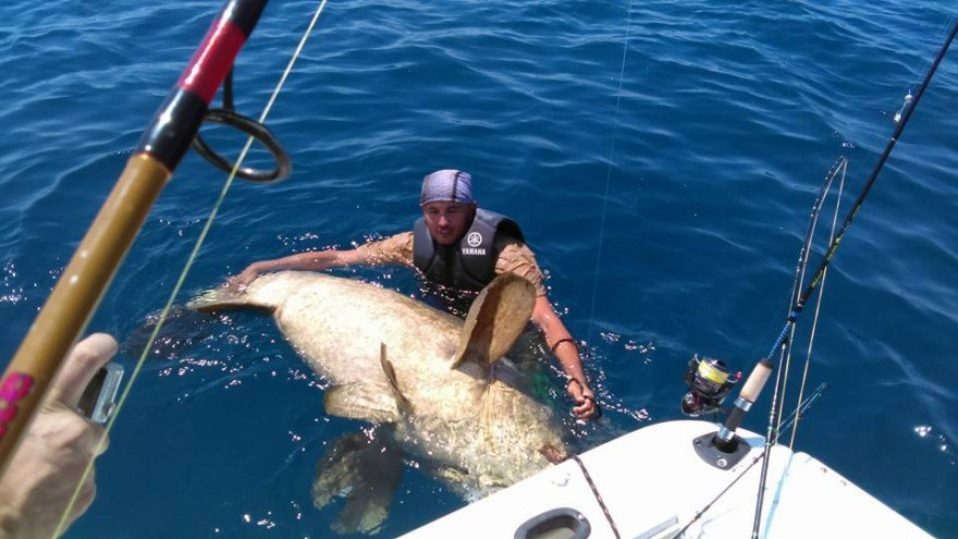 Goliath Grouper Caught on  A Wrench